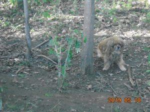 Fához kötött ki egy kutyát, az oroszlányi rendőrök keresik