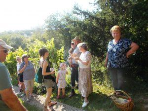 Budaörsi biokertész biokertjében