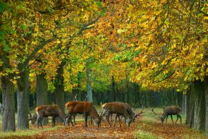 Természetközeli vadgazdálkodás a Pilisi Parkerdőben