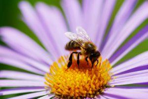 Érzékenyítő mese a méhekért